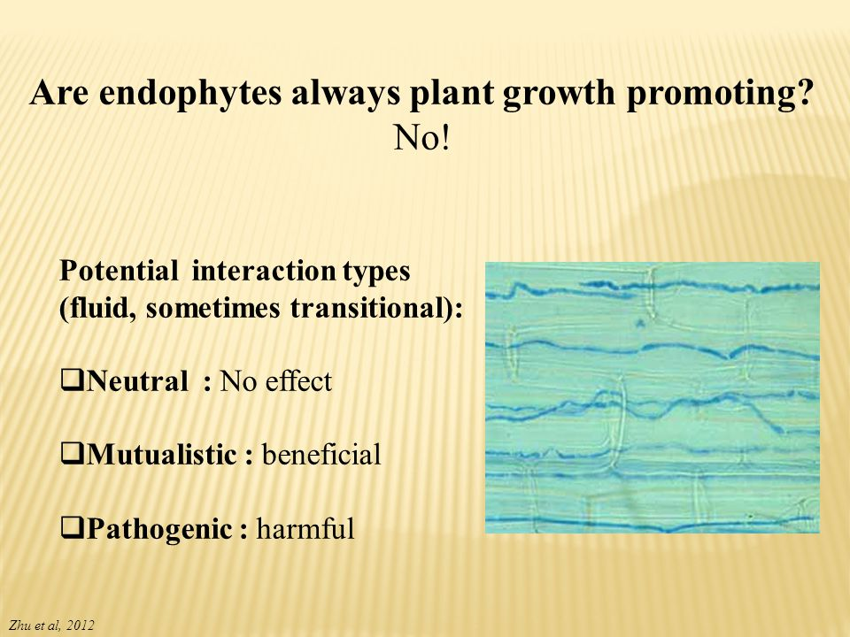 Are endophytes always plant growth promoting