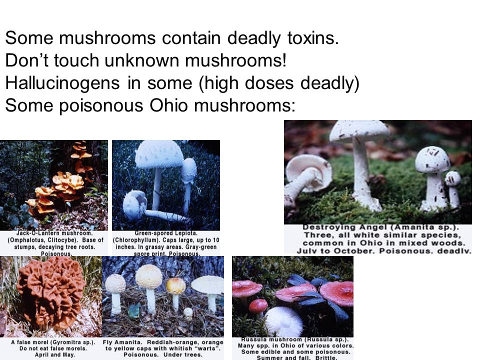 Some mushrooms contain deadly toxins. Don't touch unknown mushrooms