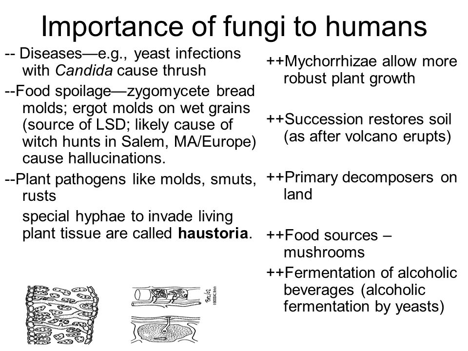 Importance of fungi to humans