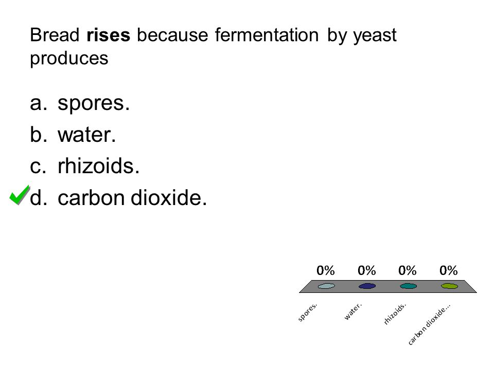 Bread rises because fermentation by yeast produces
