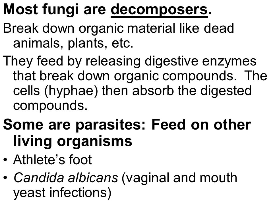 Most fungi are decomposers.