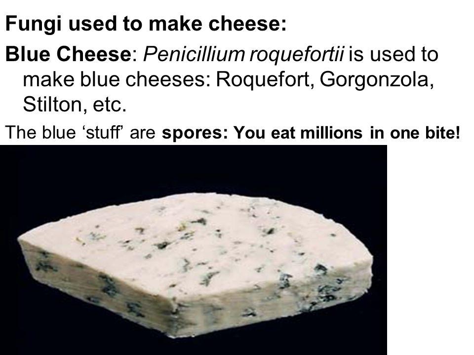Fungi used to make cheese: