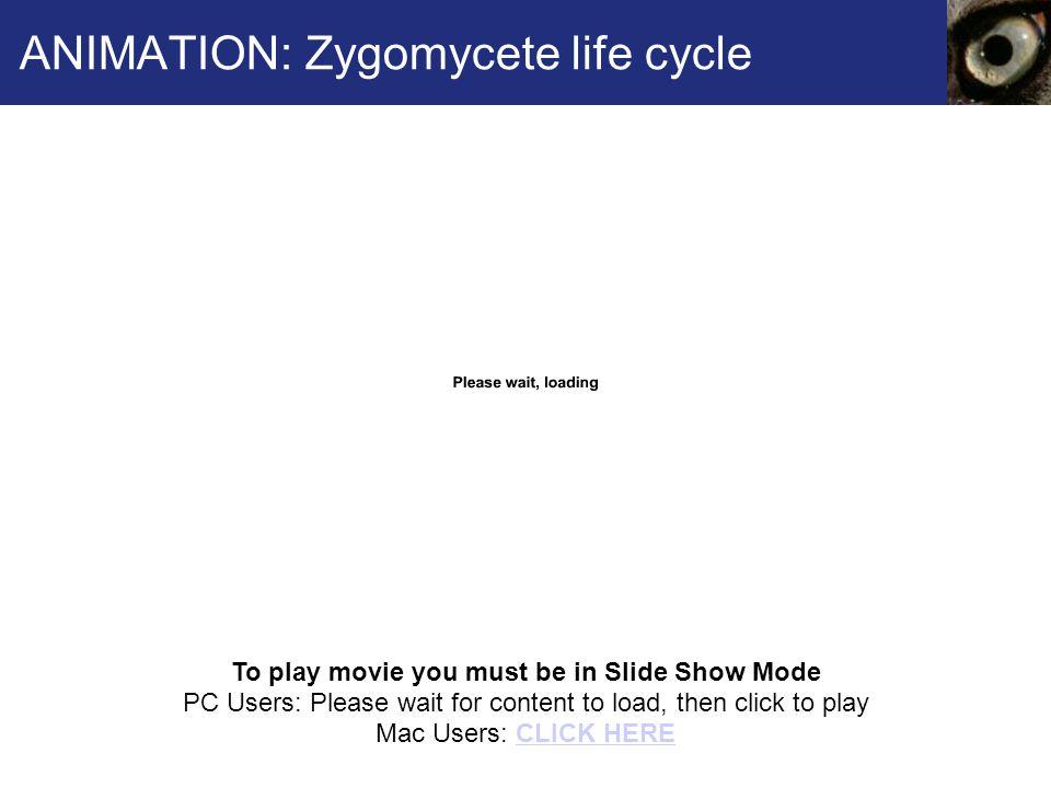ANIMATION: Zygomycete life cycle
