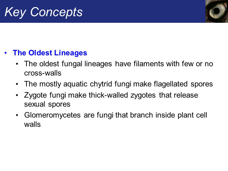 Key Concepts The Oldest Lineages