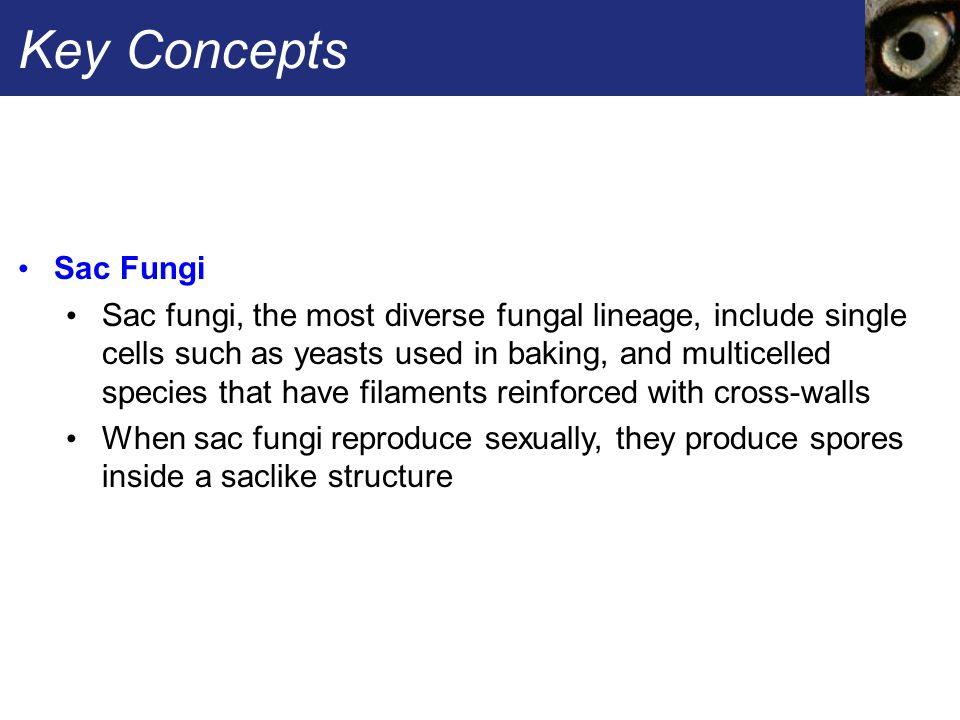 Key Concepts Sac Fungi.