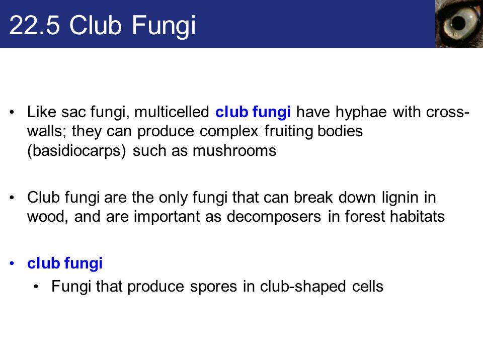 22.5 Club Fungi