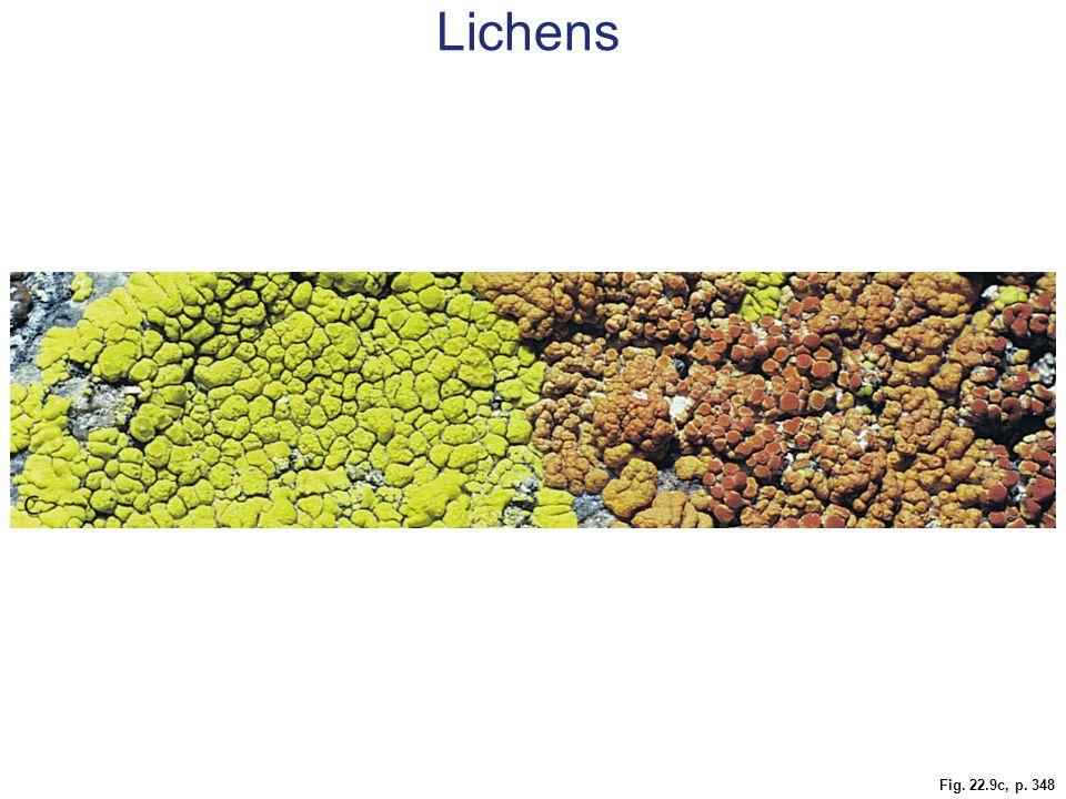 Lichens Figure 22.9 Lichens. A Leaflike lichen on a birch tree. B Cross-section of a leaflike lichen. C Encrusting lichens on granite.