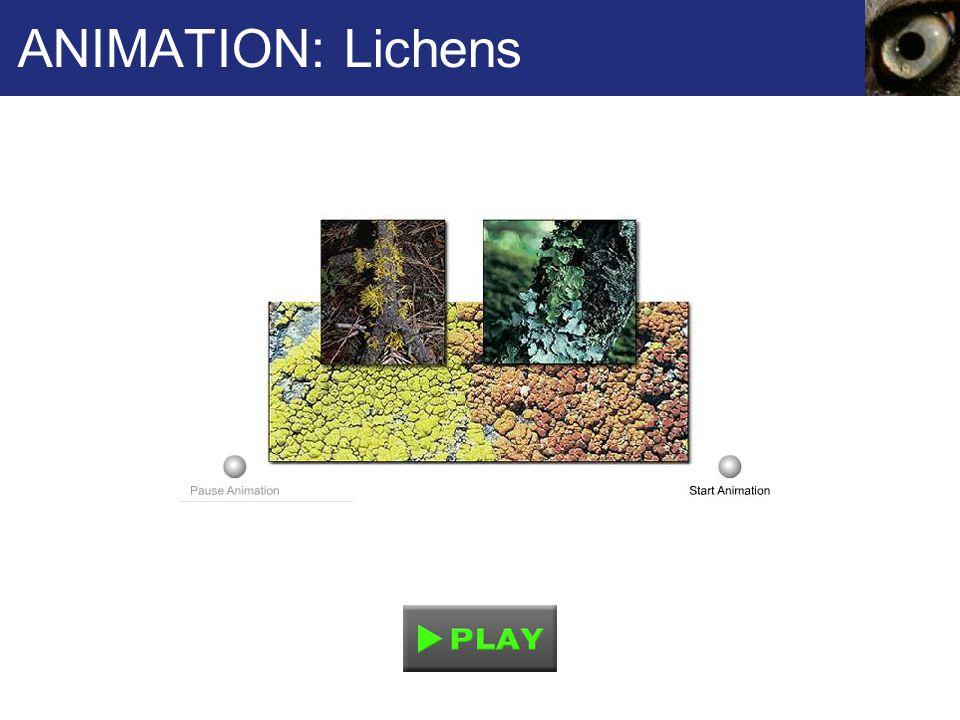 ANIMATION: Lichens 55