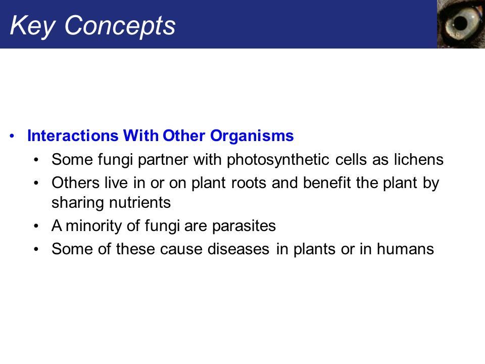 Key Concepts Interactions With Other Organisms