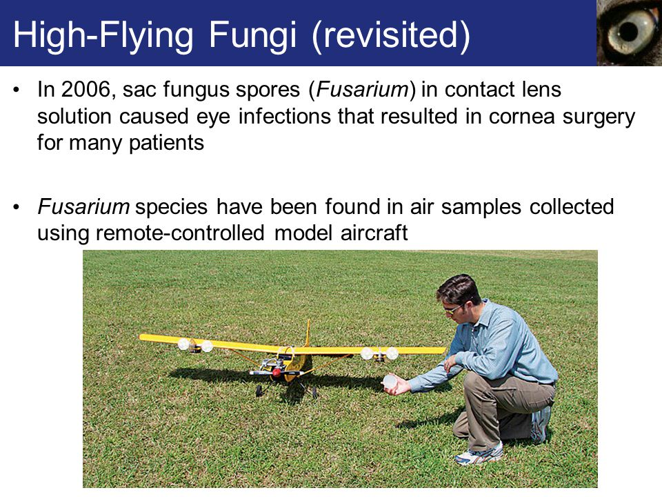High-Flying Fungi (revisited)
