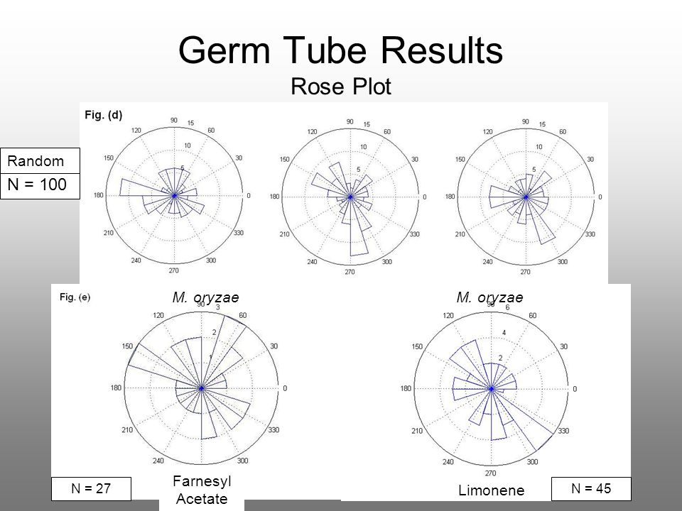 Germ Tube Results Rose Plot