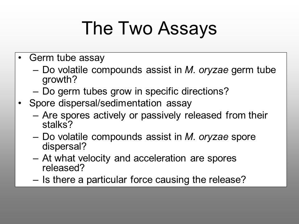 The Two Assays Germ tube assay