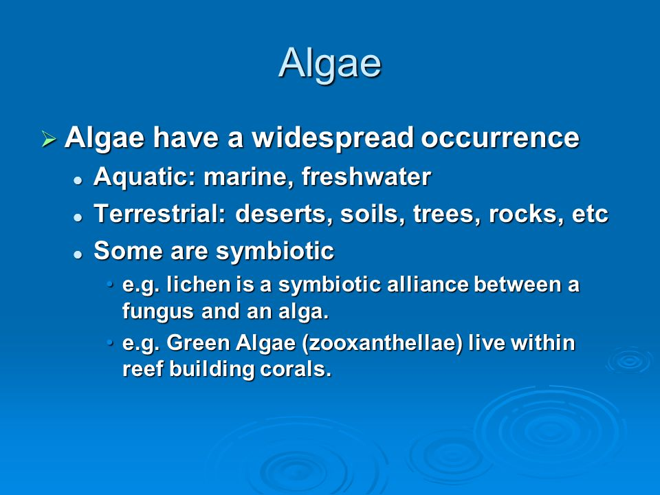 Algae Algae have a widespread occurrence Aquatic: marine, freshwater