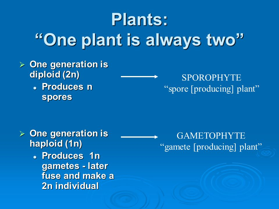 Plants: One plant is always two