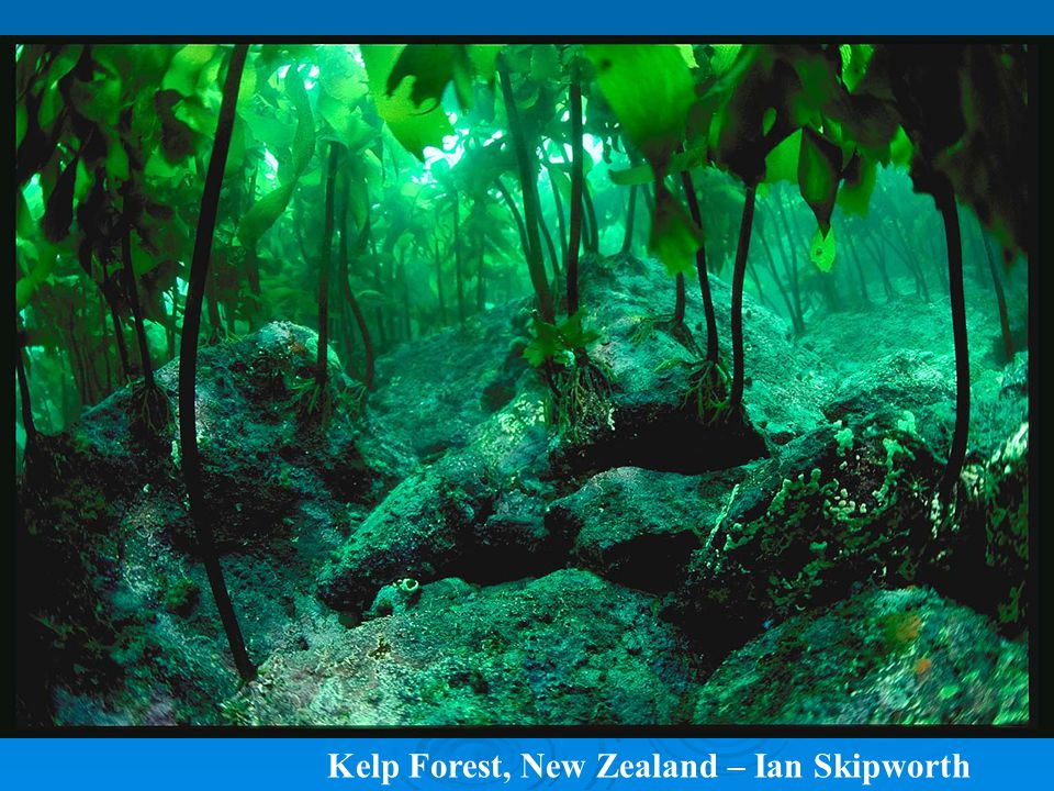 Kelp Forest, New Zealand – Ian Skipworth