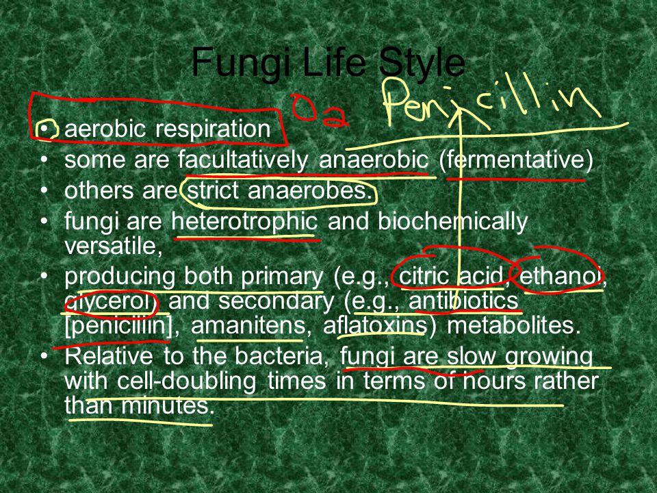 Fungi Life Style aerobic respiration