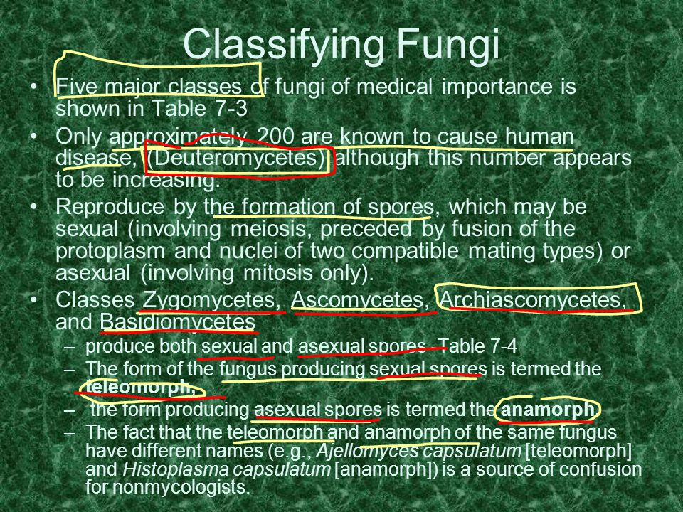 Classifying Fungi Five major classes of fungi of medical importance is shown in Table 7-3.