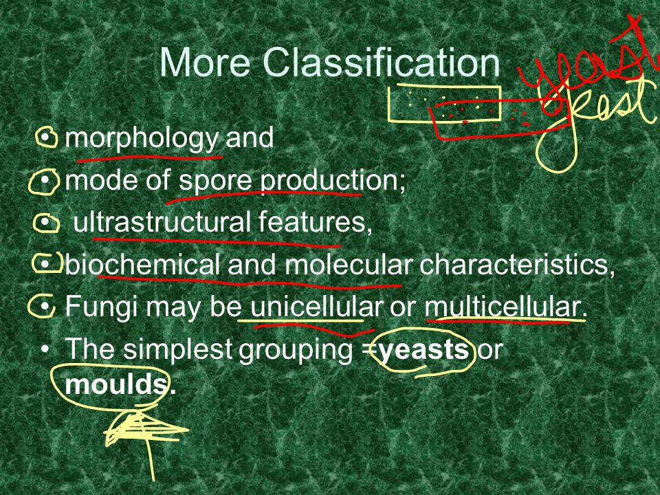 More Classification morphology and mode of spore production;