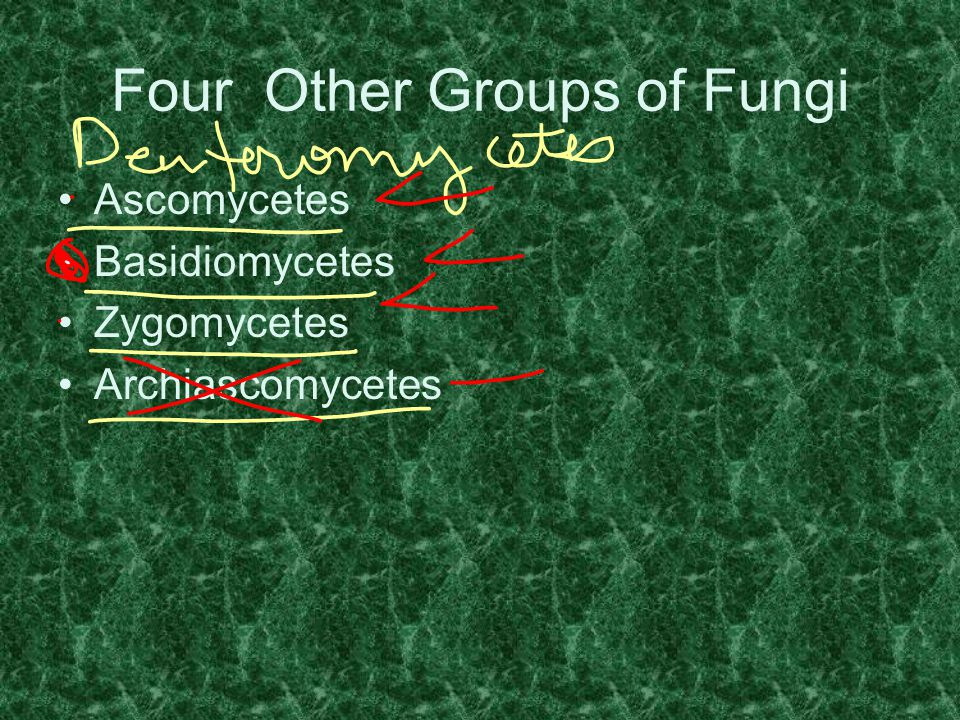 Four Other Groups of Fungi