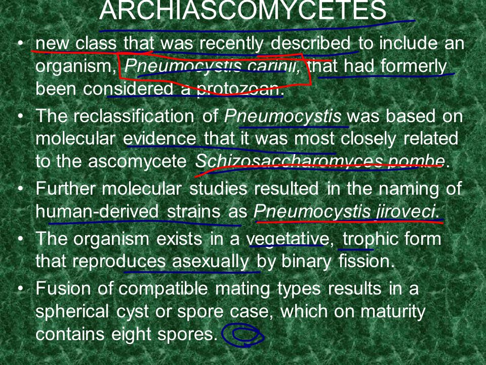 ARCHIASCOMYCETES new class that was recently described to include an organism, Pneumocystis carinii, that had formerly been considered a protozoan.