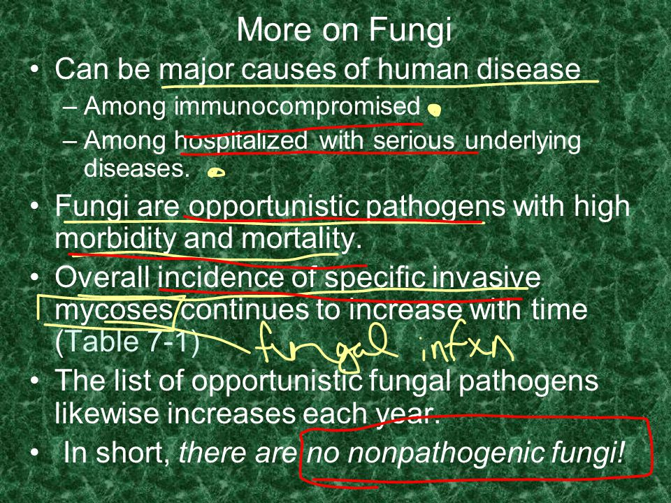 More on Fungi Can be major causes of human disease