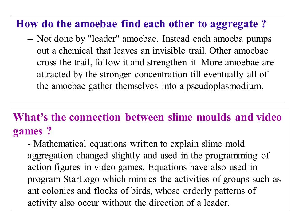 How do the amoebae find each other to aggregate
