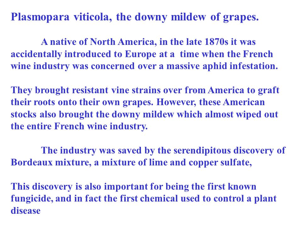 Plasmopara viticola, the downy mildew of grapes.