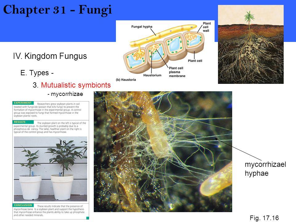 Chapter 31 - Fungi IV. Kingdom Fungus E. Types -