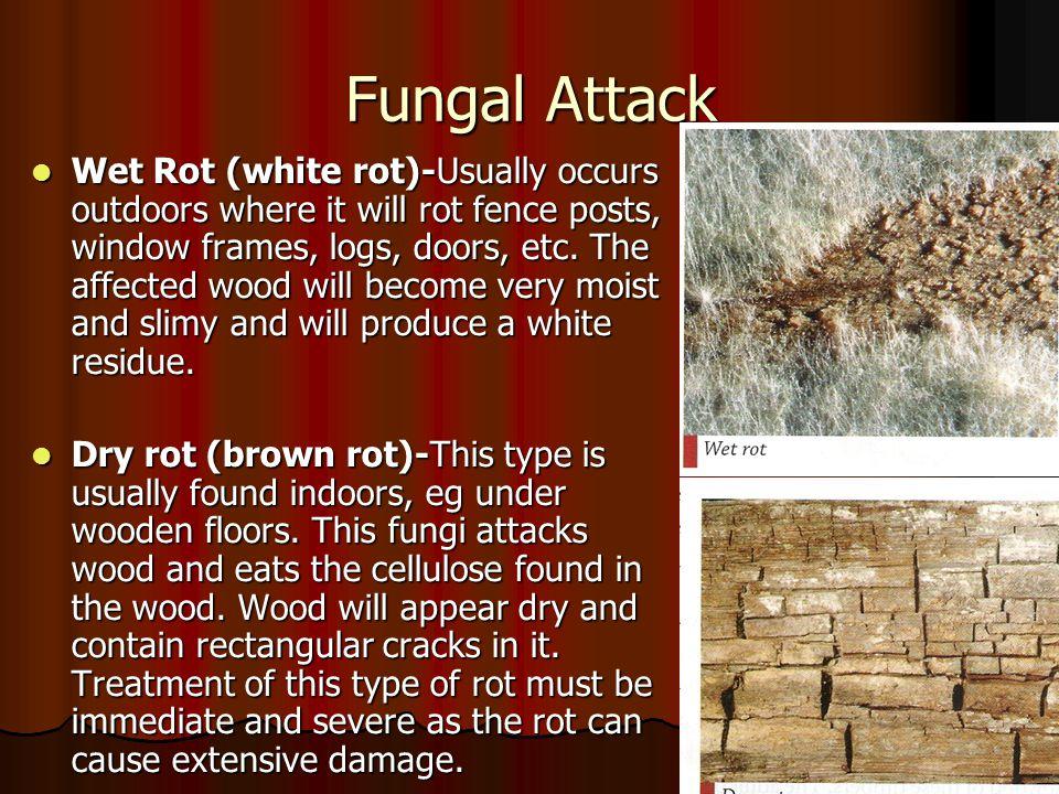 Fungal Attack