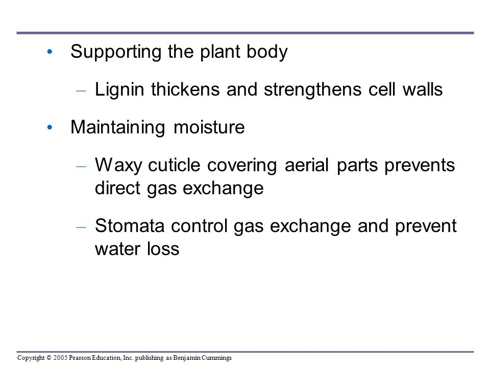 Supporting the plant body