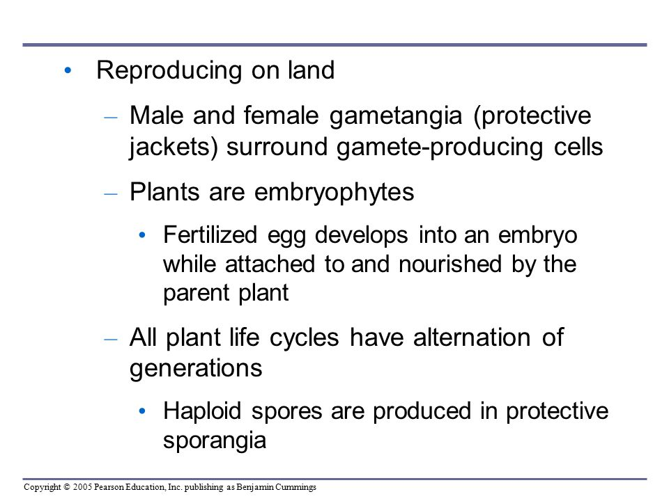 Plants are embryophytes