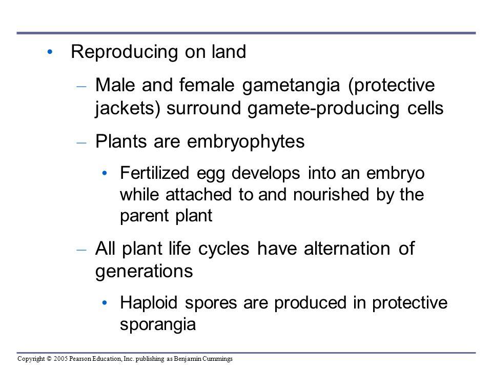 Plants are embryophytes