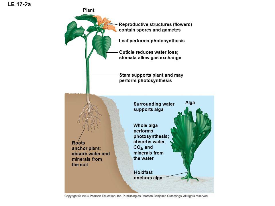 LE 17-2a Plant Reproductive structures (flowers)