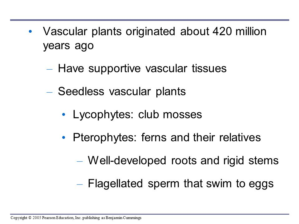 Vascular plants originated about 420 million years ago
