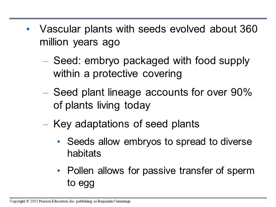 Vascular plants with seeds evolved about 360 million years ago
