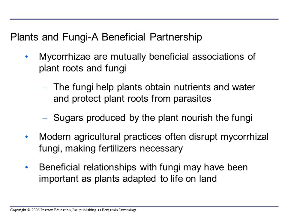 Plants and Fungi-A Beneficial Partnership