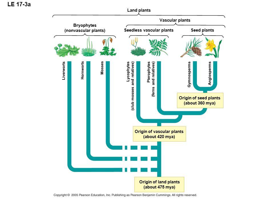 Seedless vascular plants Origin of vascular plants