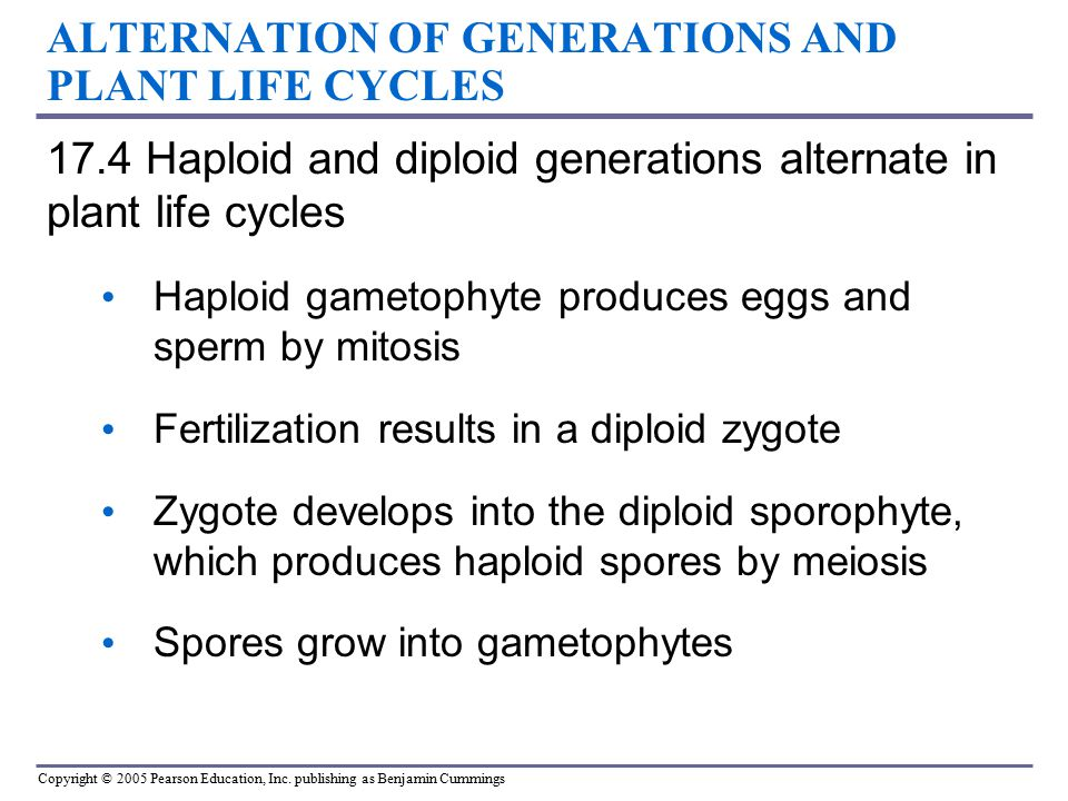ALTERNATION OF GENERATIONS AND PLANT LIFE CYCLES