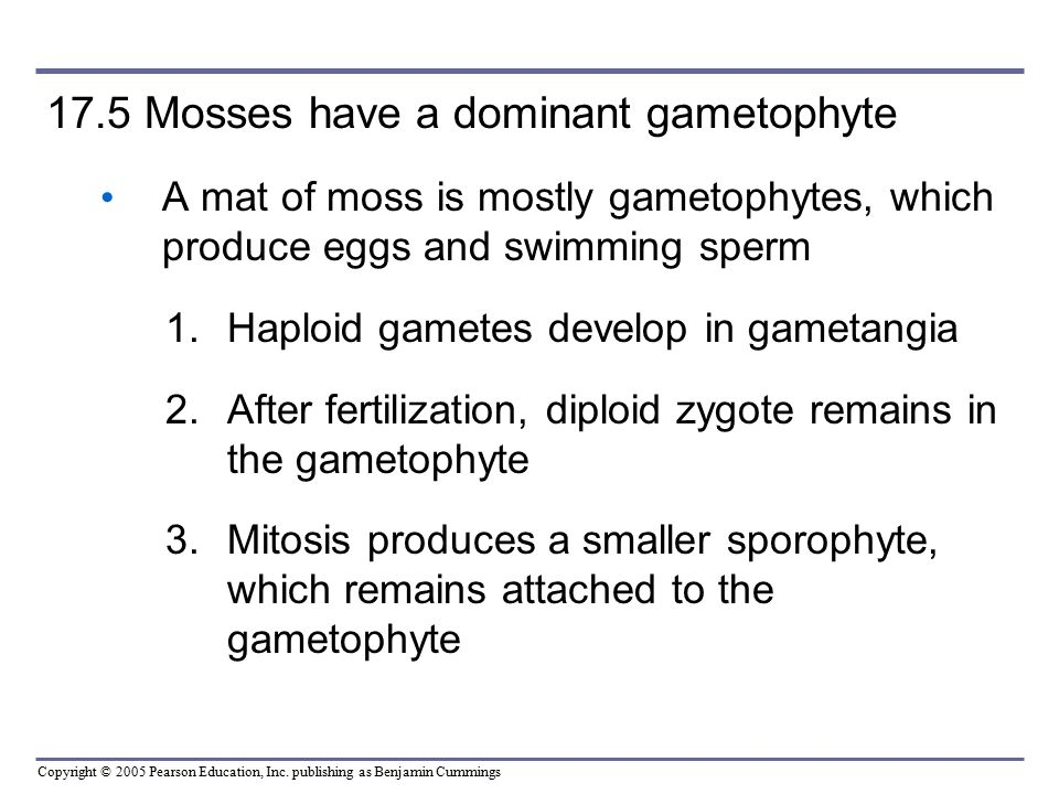 17.5 Mosses have a dominant gametophyte