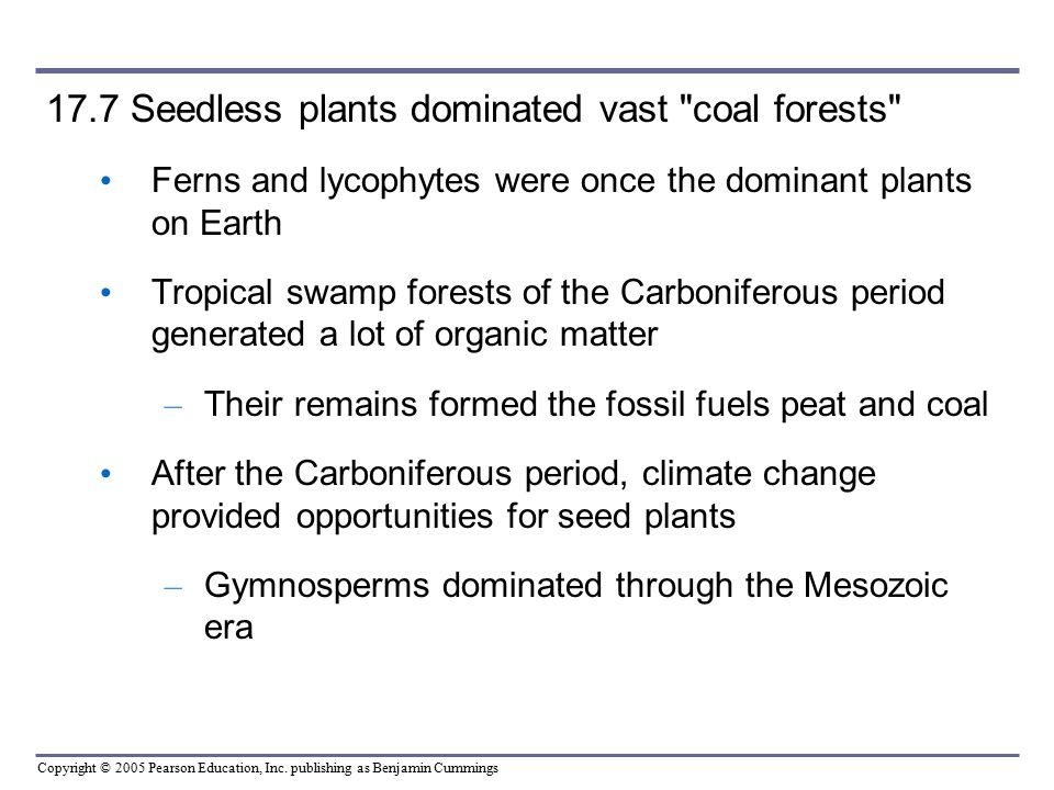 17.7 Seedless plants dominated vast coal forests