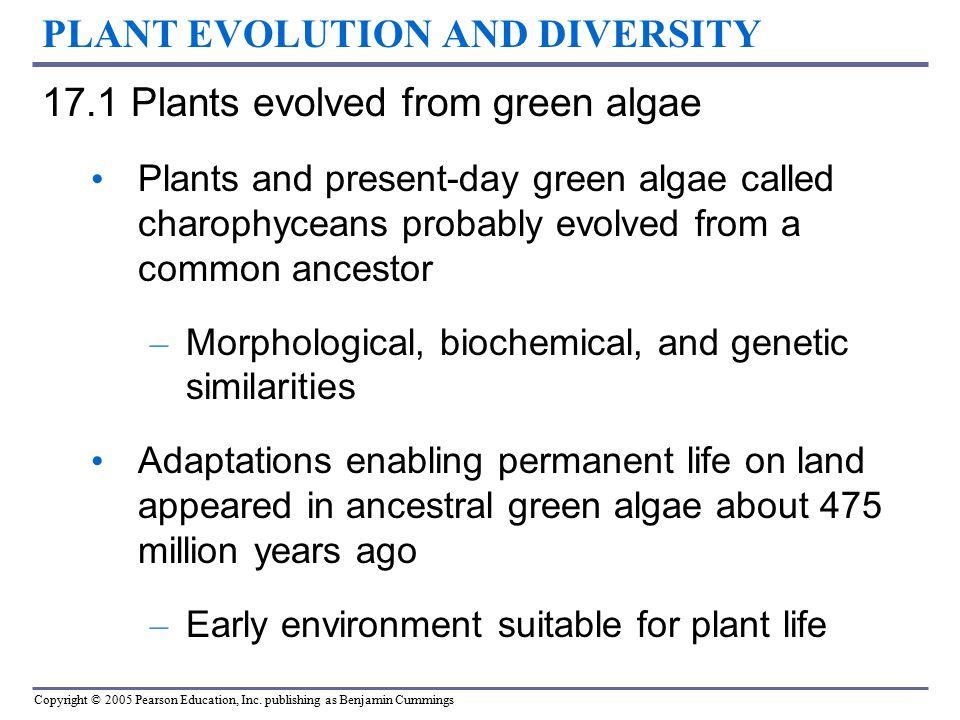 PLANT EVOLUTION AND DIVERSITY