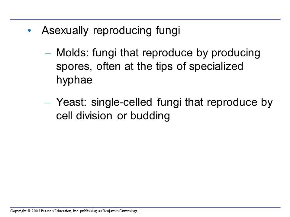 Asexually reproducing fungi