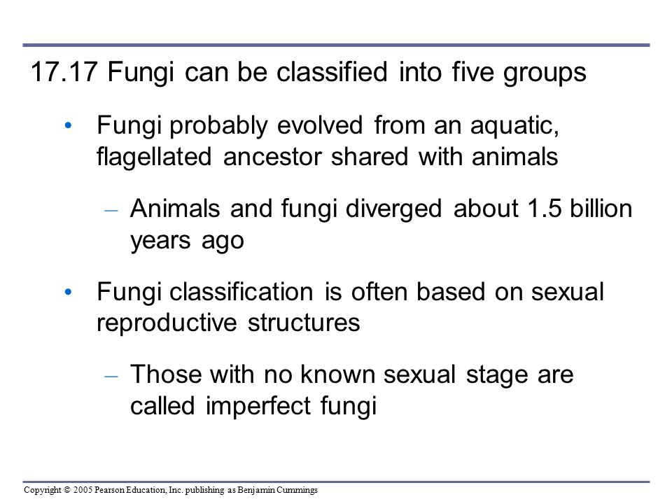 17.17 Fungi can be classified into five groups