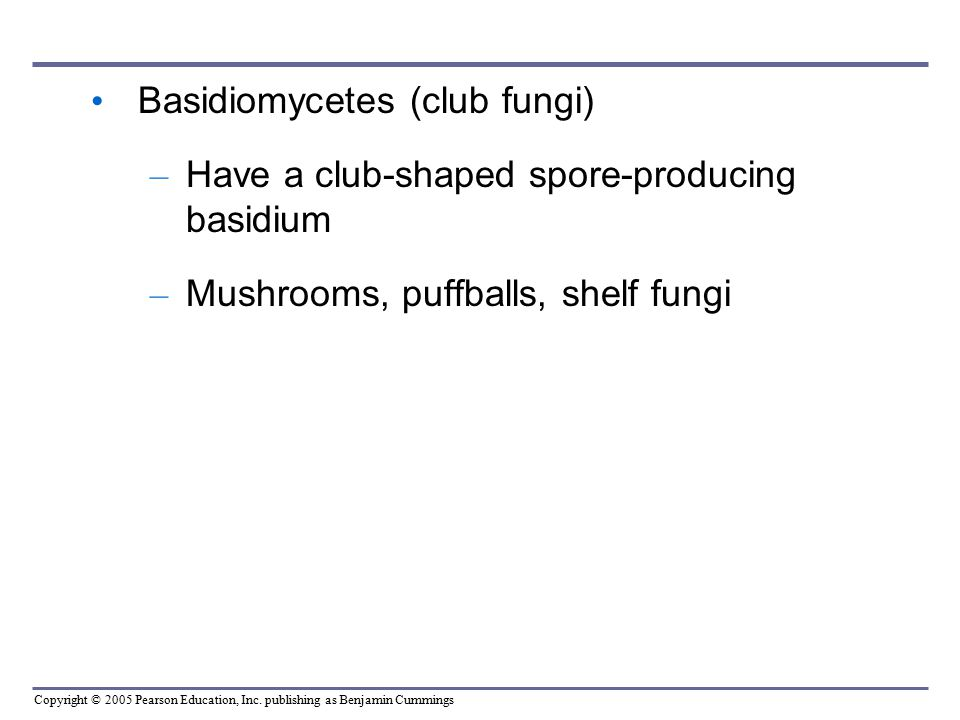Basidiomycetes (club fungi)