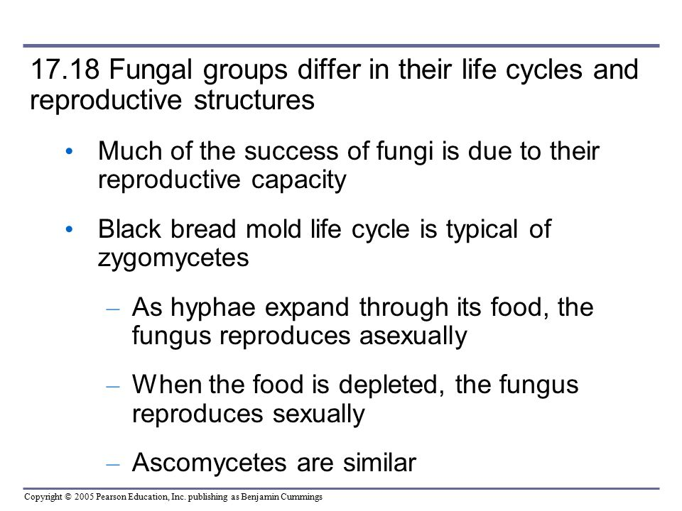 17.18 Fungal groups differ in their life cycles and reproductive structures