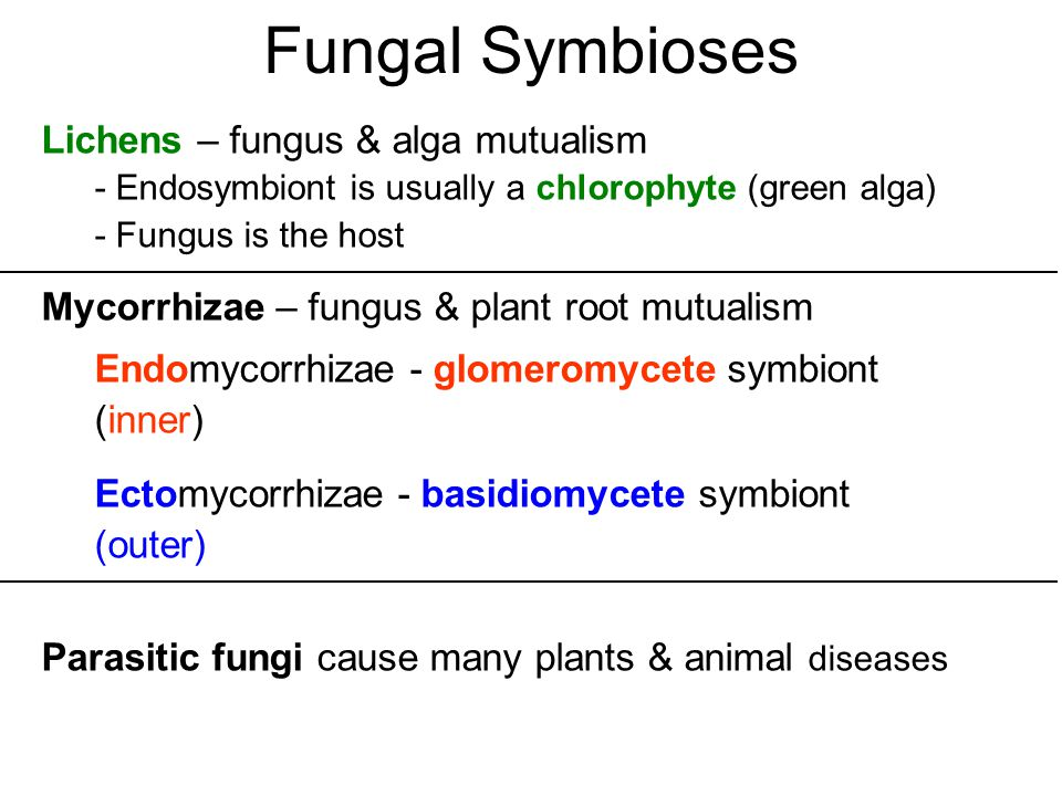 plants and fungus mutualism relationship