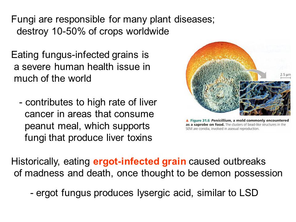 Fungi are responsible for many plant diseases;