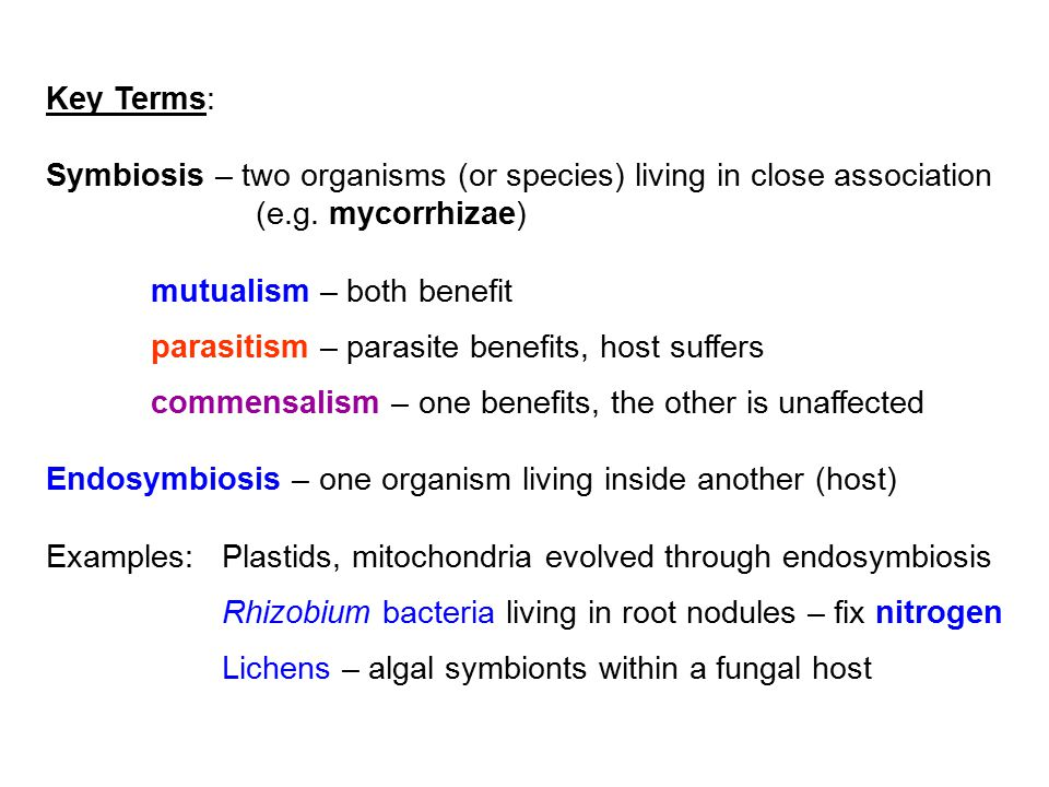 Key Terms: Symbiosis – two organisms (or species) living in close association. (e.g. mycorrhizae) mutualism – both benefit.