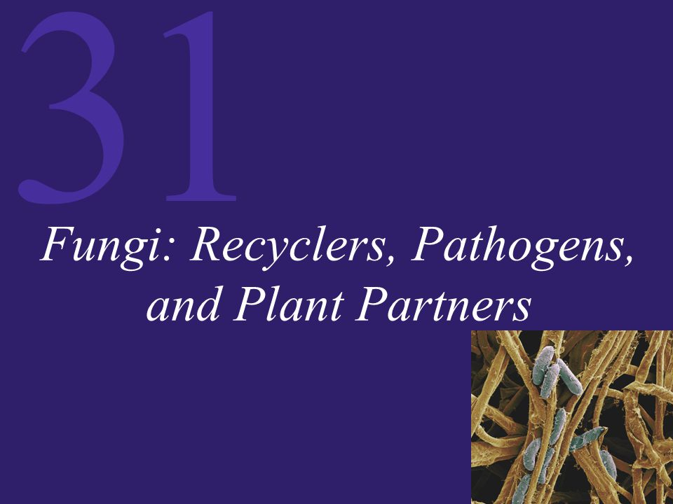 Fungi: Recyclers, Pathogens, and Plant Partners