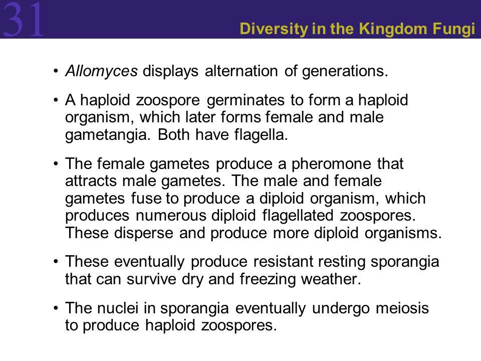 Diversity in the Kingdom Fungi